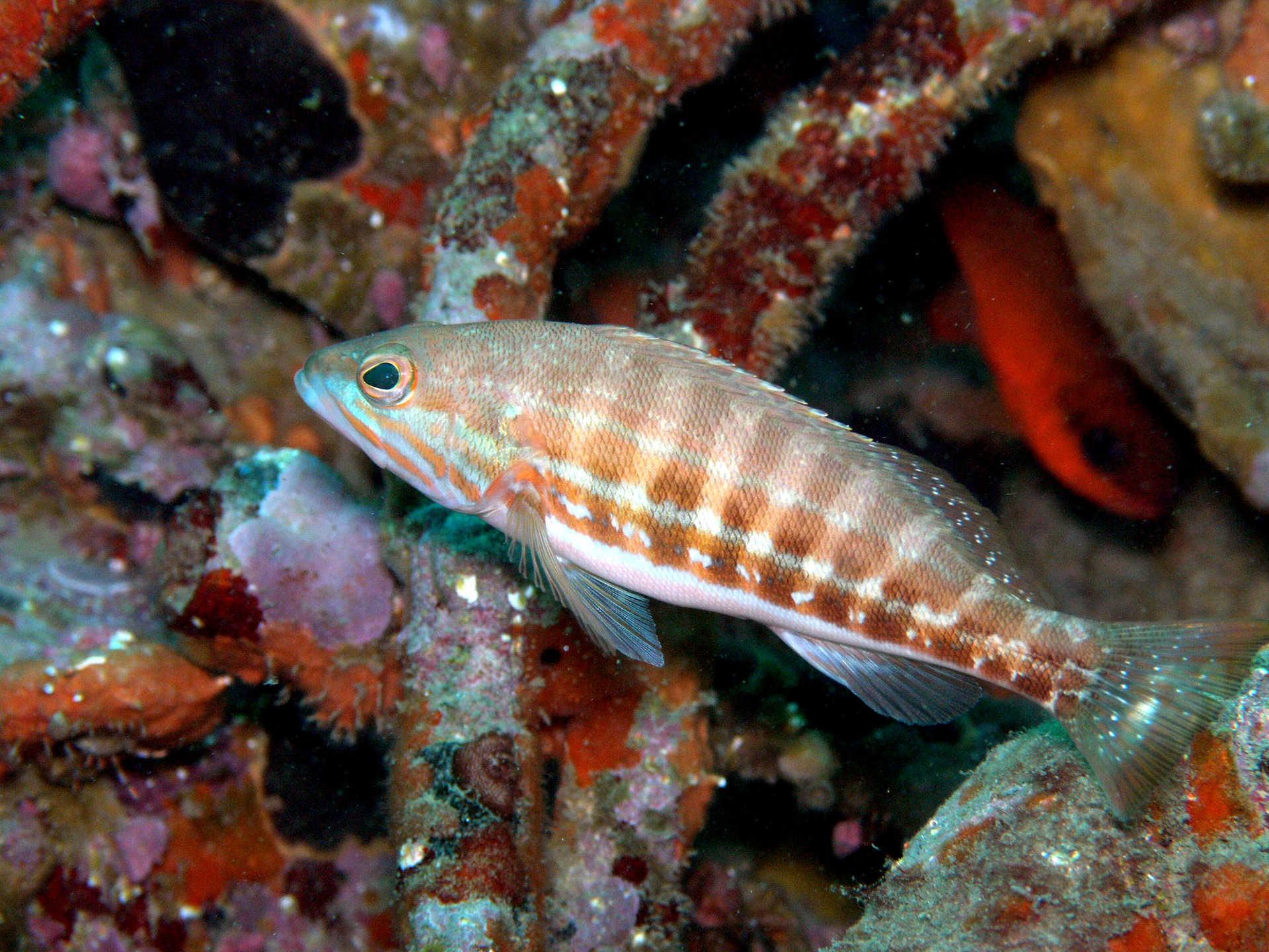 Spainventure Fauna in a sea diving Fuengirola por fin lo hicimos