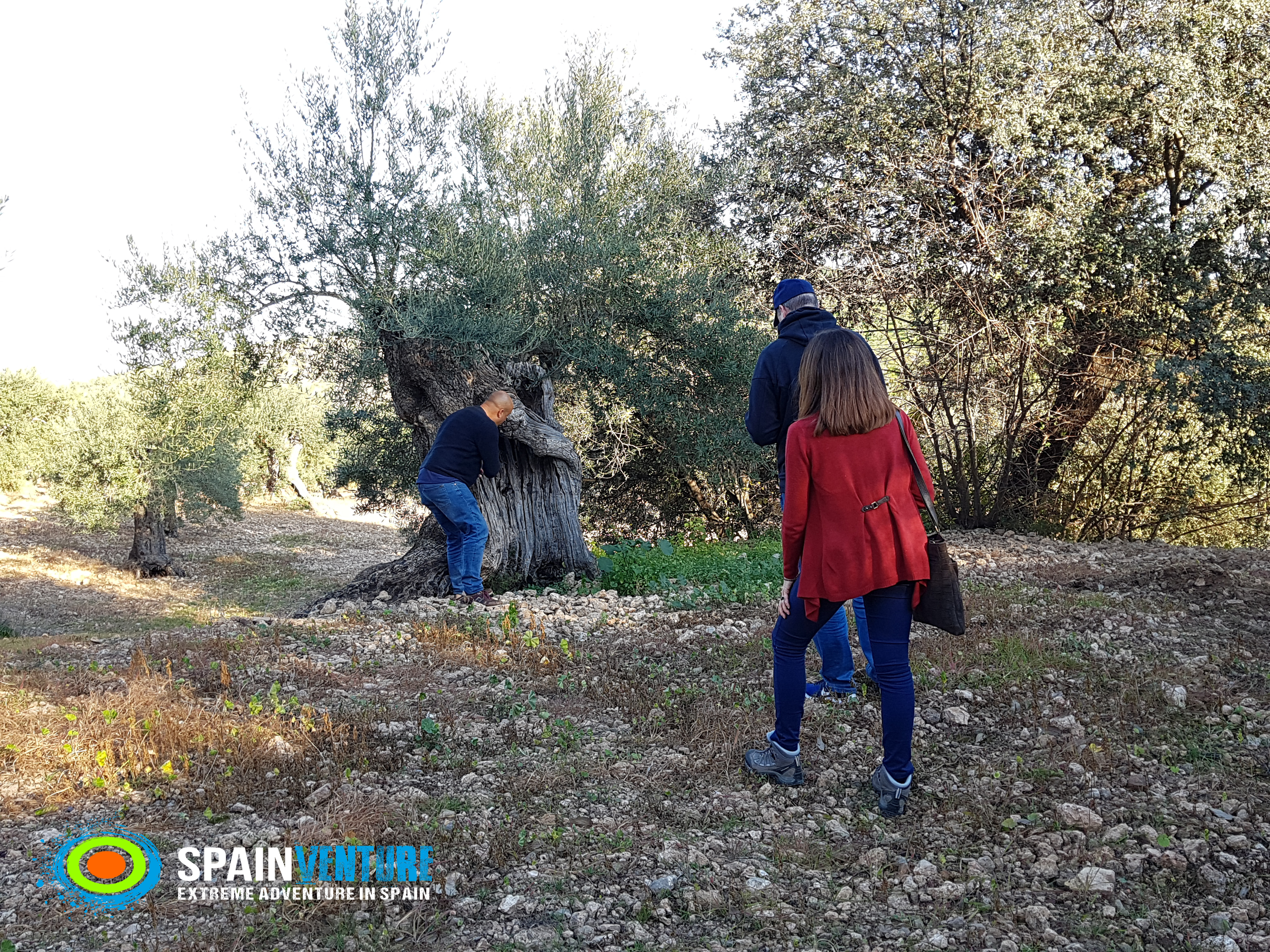 Spainventure adventure among olive trees small groups